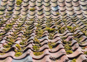 nettoyage et démoussage toiture toit